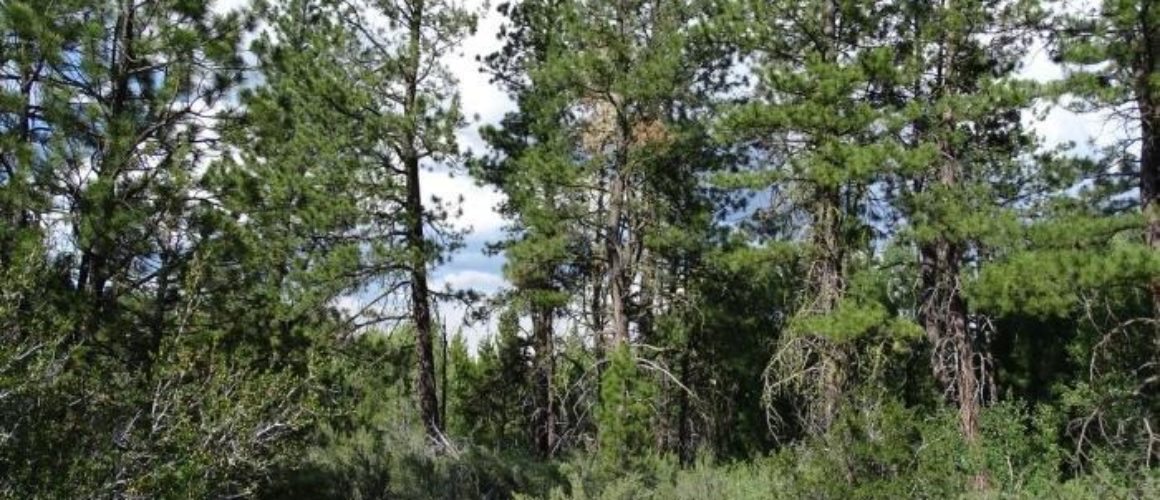 1.56 Acres in Northeast Klamath Co, OR