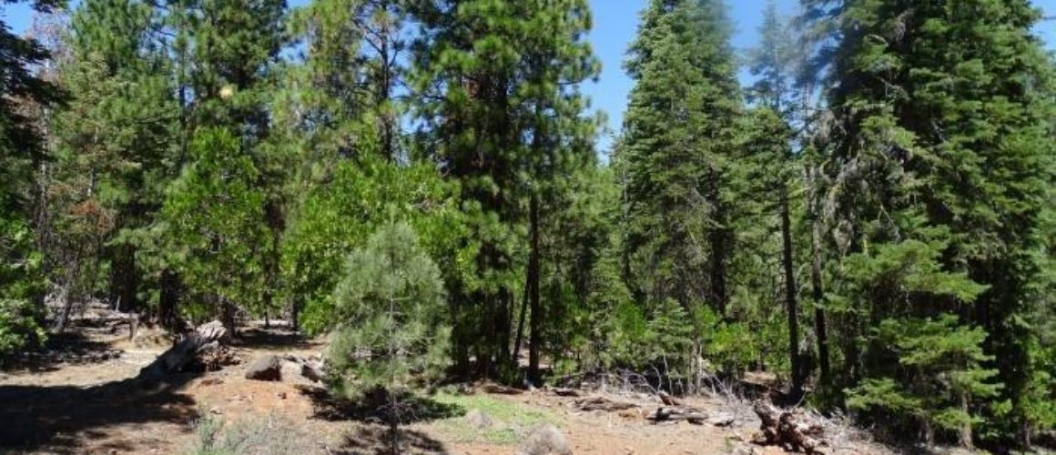 1.01 Acres in Modoc County, CA