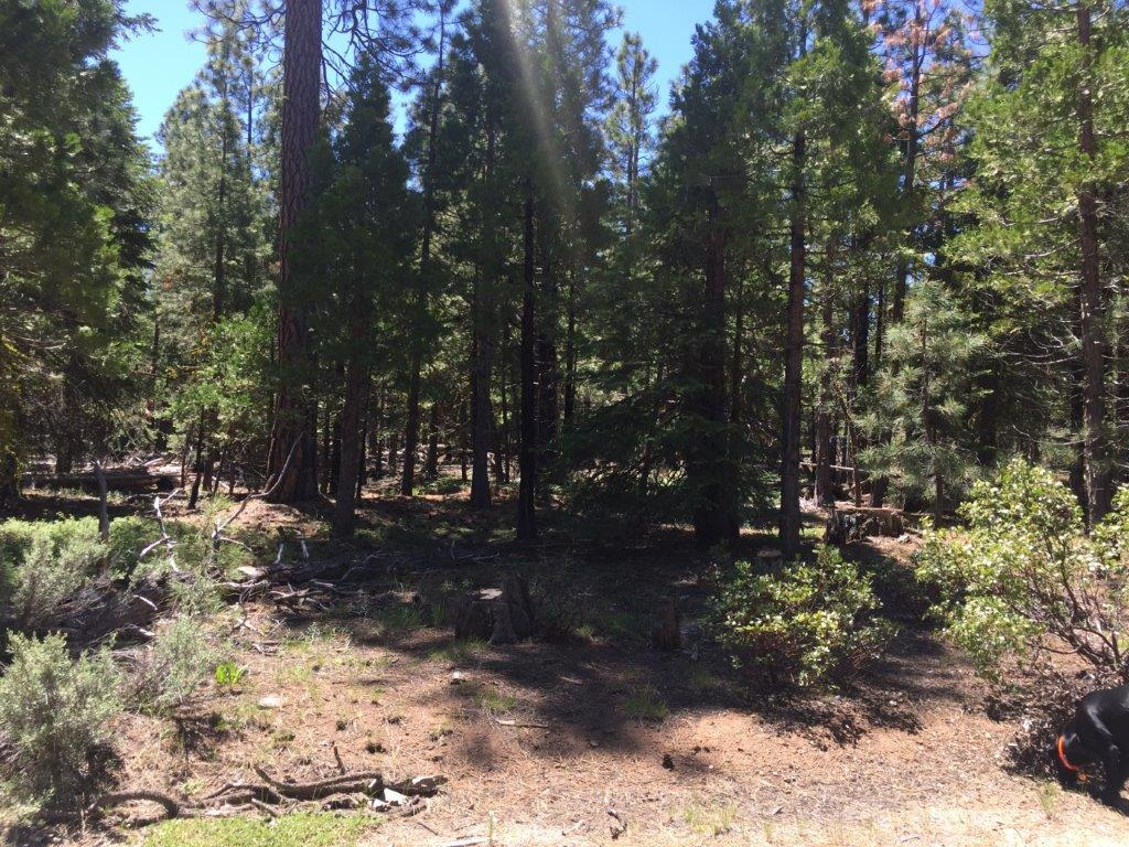 2.3 Acres in Klamath County, OR