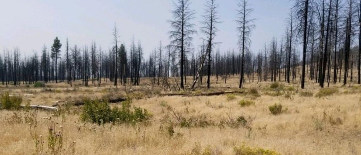 7.64 acres in Southern Oregon