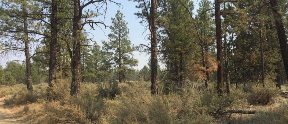 2.43 acres near Sprague River, OR