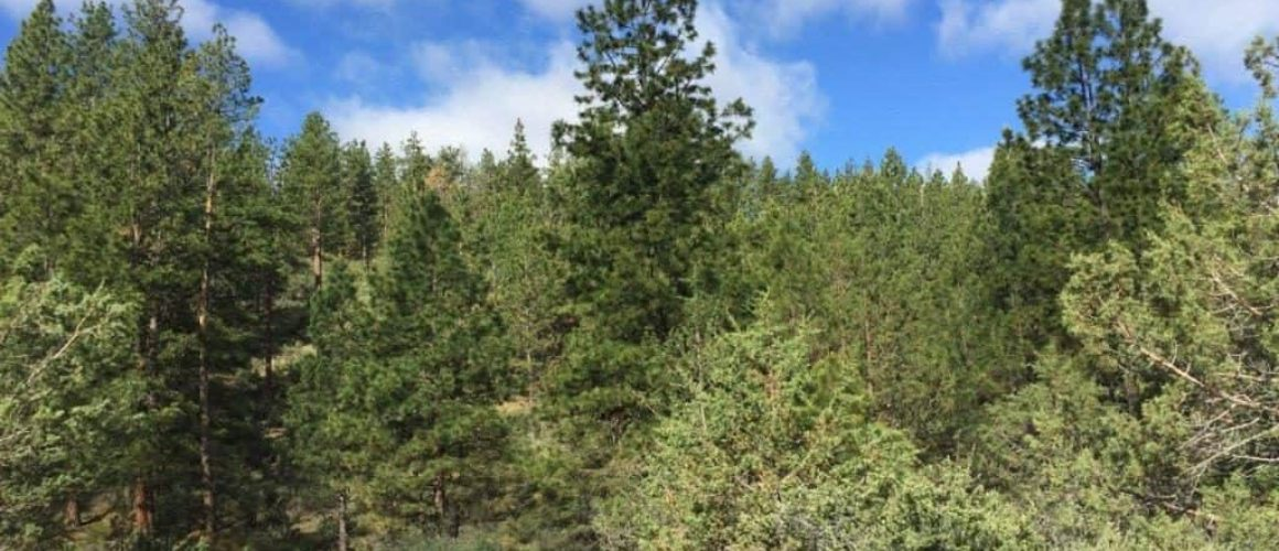 1.88 Acres near Dairy, OR